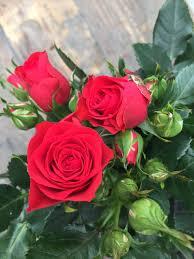 forever roses roses forever u2013 rosa aps