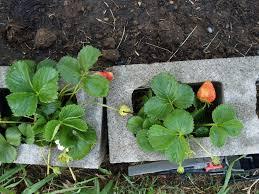 how will my garden grow week 1 2 u2013 retrohipmama