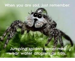 Friendly Spider Memes Image Memes - jumping spiders sometimes water droplets hats jumping spider