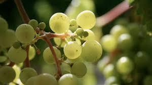 killing pests without the pesticides u2014 nova next pbs