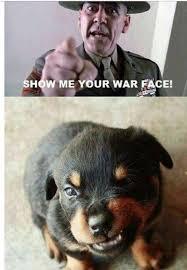 Puppy Face Meme - mean face meme by dekrafter memedroid