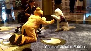 adorable video shows moment playful service dog meets pluto