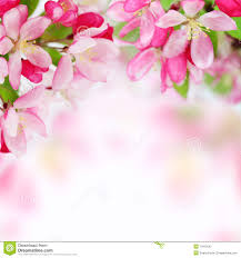 soft spring apple flowers background 11912242 flowers background