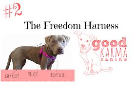 top 10 valentine u0027s day gifts for your dog good karma canine