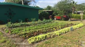 Vegetable Gardens In Florida by An All Volunteer Squad Of Farmers Is Turning Florida Lawns Into