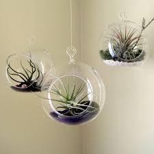 aliexpress com buy 6pcs set hanging air plant holder 10cm globe