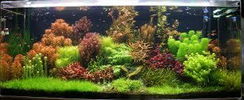 planted tank dutch jungle by mark crow aquarium design contest