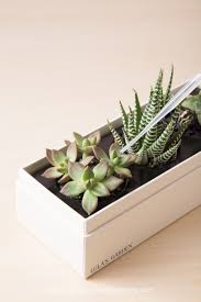 succulents meaning how to water succulents without drainage succulents and sunshine