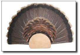 how to make turkey feathers the turkey zone turkey fan mount how to