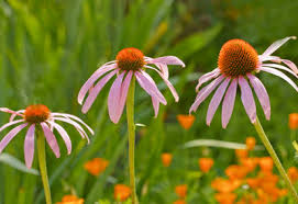 how to plant perennial flowers planet natural