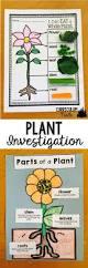plant activities for kindergarten preschool first grade