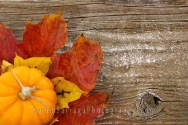 colorful autumn background pumpkin karen sarraga photography