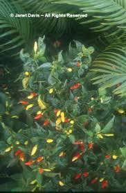 beautifulbotany botanical c stock photography by janet davis