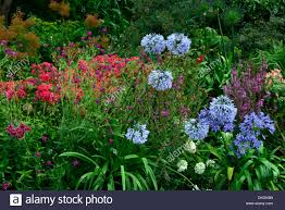 dillons floral dillon garden dublin ireland perennial border contrasting flower