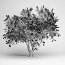 bottlebrush tree 3d model cgtrader