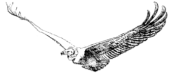 raptor adaptations