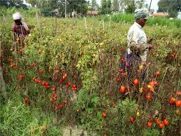 fix msp for vegetables and fruits farm body to govt amritsar