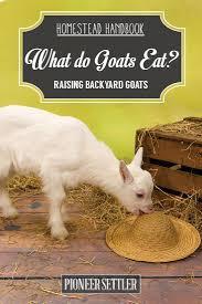 98 best goats images on pinterest goat farming goat milk