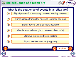 Motor Reflex Arc Understand Why A Reflex Arc Pathway Is Followed Ppt Video