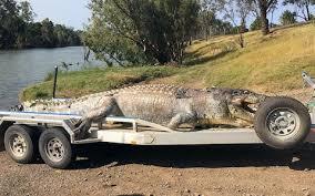Power Vaccum Warnings Of Crocodile U0027power Vacuum U0027 In Australian River After