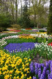 flower gardens colorful flower garden free stock photo public domain pictures
