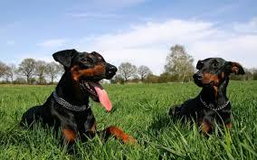 pets news tips u0026 guides glamour pet insurance news u0026 advice