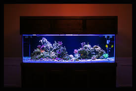 Aquascape Designs For Aquariums Aquascaping Pictures Ideas And Sketches Page 2 Reef2reef