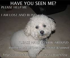 bichon frise in ohio 92 best lost or found pets images on pinterest animal rescue