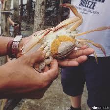 Pleins De Crabe Violonistes Très Ecotourisme Thaïlande Vivre Avec Les Pêcheurs à Phang Nga