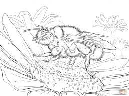 buff tailed bumblebee coloring book animal pictures of bees