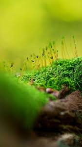 widescreen collection android nature on hd with wallpaper for