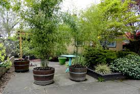 astonishing decoration bamboo privacy potted bamboo privacy