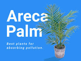 plants that help clean indoor air business insider