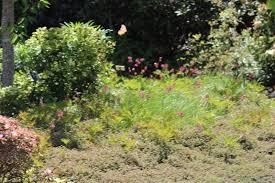botanical gardens fort bragg ca festival of lights hidden pines rv park cground fort bragg california mendocino