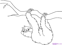 sloth coloring page nywestierescue com