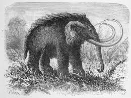 28 megafauna mammoths images extinct