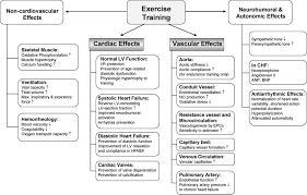 cardiovascular effects of exercise training circulation