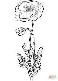 red poppy coloring free printable coloring pages