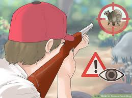 is a bluetick coonhound a good pet 4 ways to train a coon dog wikihow