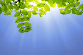 green leaves and sun free stock photo public domain pictures