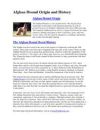 afghan hound times afghan hound origin and history dog breeds dogs