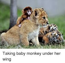 Baby Monkey Meme - monkey and monkey meme on astrologymemes com