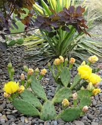 native plant nursery portland oregon danger garden yes you can grow cactus in portland and many