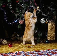 cat christmas tree decorations christmas lights decoration