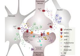 uwe maskos integrative neurobiology of cholinergic systems