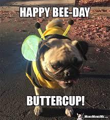 Funny Animal Birthday Memes - happy birthdays are funny happy birthday memes hilarious b day