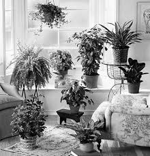 home decoration with plants ideas tropical indoor plants home design and decor image of loversiq