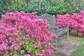 Flowers For Backyard by 30 Incredible Backyard Design Ideas Slodive