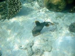 your marine biologists favorite fish coco cares