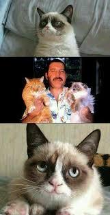 Freddie Mercury Meme - freddie mercury loved cats meme slapcaption com yeah and the